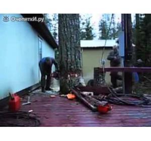 Embedded thumbnail for Как правильно свалить дерево бензопилой